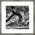 Tree Of Life - Bw Framed Print by Kenneth Mucke