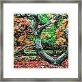 Tree Of Life Framed Print by Sarai Rachel