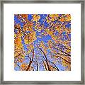 Tree Tops Framed Print