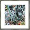 Tree Trio In Lichen At Hawn State Park Framed Print