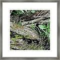 Tree Trunk And Ferns Framed Print