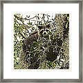 Treed Framed Print
