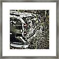 Trees And Trunk Framed Print