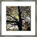 Trees During Autumn Framed Print