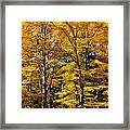 Trees Of Gold Framed Print