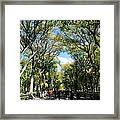 Trees On The Mall In Central Park Framed Print