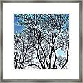 Treescapade Framed Print