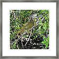 Tropical Iguana Framed Print