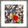 Tulip Petal And Wet Stones Framed Print