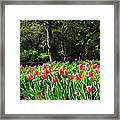 Tulips And Woods Framed Print