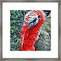 Turkey Brawn  Framed Print