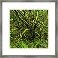 Twisted Rain Forest Framed Print