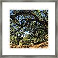 Under The Oak Canopy Framed Print