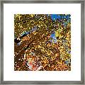 Underside Of Fall Framed Print