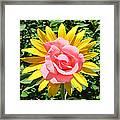 Unique Sun Rose Framed Print