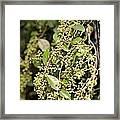 Unripened Inkberries Framed Print