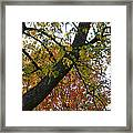 Up There Framed Print
