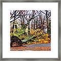 Uprooted Framed Print