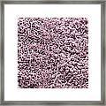 Ureter Lining, Sem Framed Print by Steve Gschmeissner