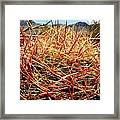 Valley Of Fire Framed Print