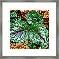 Vibrant Ground Cover  Framed Print
