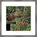 Visitor To The Feeder Framed Print