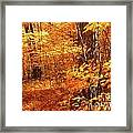 Walking Through The Maple Trees  Framed Print
