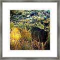 Watcher Framed Print