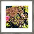 Waterlilies In A Garden Pool Framed Print