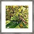Webworm Moth Framed Print