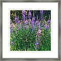 Weed Party Framed Print