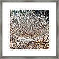 Weed Wandering Framed Print