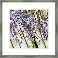 Weeping Wisteria Framed Print
