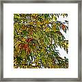 Welcome Sight Framed Print