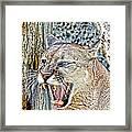 Western Cougar Framed Print