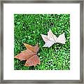 Wet Leaves On Grass Framed Print
