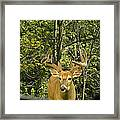 While Checking My Settings... Framed Print