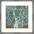 White Gum Forest Framed Print