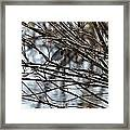 White Wagtail Framed Print