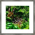 Whitetail Fawn And Ferns Framed Print