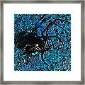 Wicked Widow - Blue Framed Print