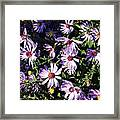Wild Asters Framed Print