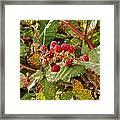 Wild Berries Framed Print by Liz Vernand