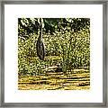 Wild Still Life Framed Print