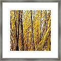 Willow Curtain Framed Print