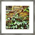 Window And Grapevines Framed Print