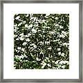 Window Onto Dogwood Blossoms  Framed Print