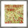 Windy Poppies Framed Print