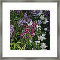 Winning Color Framed Print by Susan Herber