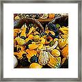 Winter Gourds  Framed Print
